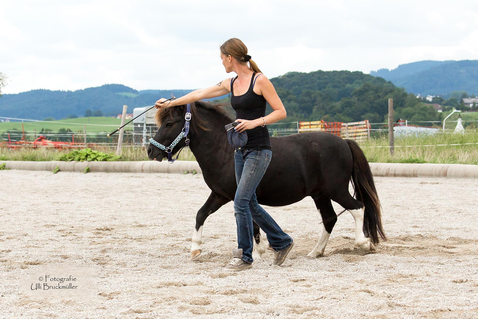 farben und ihre wirkung auf unsere pferde tash horseexperience. Black Bedroom Furniture Sets. Home Design Ideas